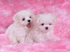 cute puppies wallpaper   DOWNLOAD WALLPAPER   ADD TEXT   ADD TO LIGHTBOX   MORE LIKE THIS