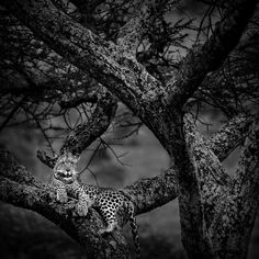 #elfoton14 #categoría #Fauna En el Concurso de Fotografía Elfoton.es tenemos 9 categorías para que todo el mundo encuentre la suya. #Instagram #sinfiltros Participa hasta 15 de  julio en http://elfoton.com Usuario: mpereda (Tanzania) - Desde la Atalaya - Tomada en Parque Nacional del Serengeti el 13/10/2012