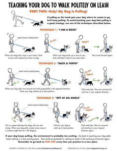 Training your dog to politely walk on a leash