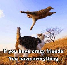 Funny pictures, humor cats, hilarious animal pictures …For more hilariousness and humor quotes visit www.bestfunnyjokes4u.com/lol-funny-cat-pic/
