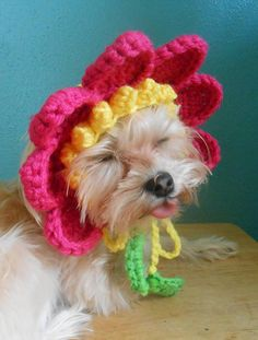 Crocheted Flower Hat for Cat or Dog Pink Flower Hat for Pet
