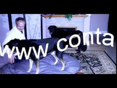 Contact canin R + - YouTube Youtube, Home Decor, Biography, Behavior, Dog, Decoration Home, Room Decor, Interior Decorating