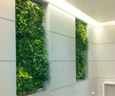 Discover the many benefits of living green walls (also known as vertical gardens) and how the structures can enrich buildings.