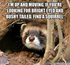 Morning Ferret / Me every morning!