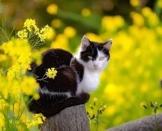 Yellow and a beautiful cat Pretty Cats, Beautiful Cats, Animals Beautiful, Cute Animals, Kittens Cutest, Cats And Kittens, Gatos Cats, White Cats, Cat Life