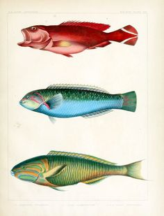 one fish, two fish, red fish, blue fish (+1)
