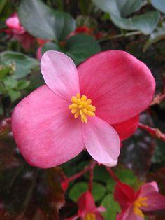 Flora Flowers, Pink Flowers, Conservatory Garden, Wonderful Flowers, Color Rosa, Stems, Blossoms, Flower Art, Flower Power