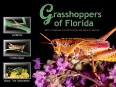Grasshoppers of Florida - includes range maps to key out various species