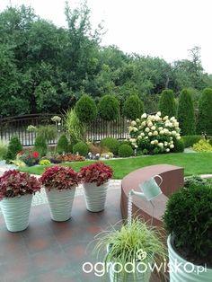 Mój przyszły ogród - strona 95 - Forum ogrodnicze - Ogrodowisko