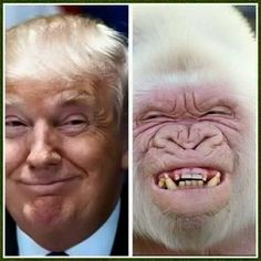 Trump's hair is starting to look a bit more manageable. Oh, never mind...