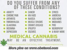Medical-Cannabis.jpg 500×377 pixels
