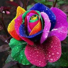 Lovely, Gay Rose!