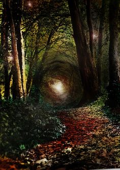Enchanted Forest,Ireland - I very recently had a dream of this exact forest...