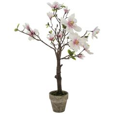 Sia Artificial Magnolia Tree in Pot Pink White Height 94cm (325 CAD) ❤ liked on Polyvore featuring home, home decor, floral decor, flowers, fillers, faux flower stems, flower pot, artificial flowers, fake flower stems and silk flowers