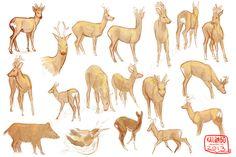 Deer studies by kalambo.deviantart.com on @deviantART