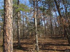 Major timber, Building sites, hunting.   Will need easement.