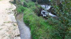 Paisaje senda del río Troncoso Country Roads, Plants, Scenery, Fotografia, Plant, Planets
