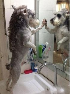 Checking out that new haircut. | 32 Dogs That Are More You Than You Even Are #funny
