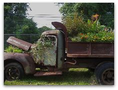 Why do rusty objects and flowers look so damned good together...love this!