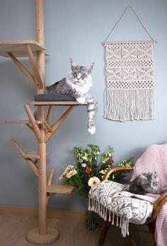 523 meilleures images du tableau pet furniture   mobilier animaux en ... 68af181726ec