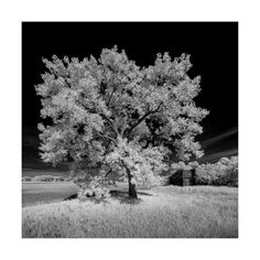 Glory by Sandra Herber I loved this beautiful tree in all its glory watching over the remains of an old homestead. If you'd like see more images from my trips to the Canadian Prairies, take a look at. Canadian Prairies, More Images, Homesteading, Trips, Country Roads, Album, My Love, Plants, Blog