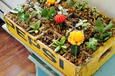 crate planters - Google Search