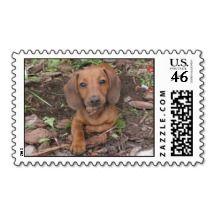 Jaxon, Dog Postage Stamps