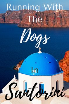Santorini is gorgeous. But get up for an early morning run, beat the crowds and . hang out with the local dogs of the village of Oia! Click through to find out more about these dogs. and Santorini! Santorini Vacation, Santorini Greece, Greece Trip, Greece Travel, Morning Running, Travel Articles, Travel Memories, Ultimate Travel, Greek Islands