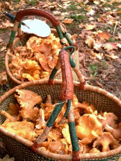 Basket full of Chantrelle Mushrooms - photo by Heather Kyle