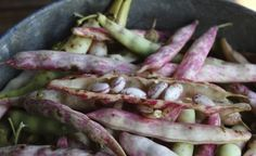How to Grow Pinto Beans: Care And Harvesting Of Pintos - If you live in a warm subtropical region, want to expand your garden bean options or you love Mexican food, you should be growing pinto beans. Find out how to grow pinto beans and other pinto bean information in this article.