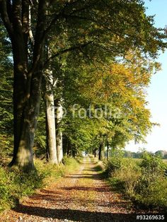 Bäume mit buntem Laub an einem Feldweg in Oerlinghausen bei Bielefeld im Teutoburger Wald