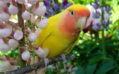 parrot wallpapers beautiful and high quality images | High Quality ...