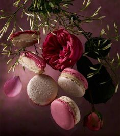 The Master of the Macaron, Pierre Hermé has created Les Jardins' Collection . A different flavour and colour macaron every month through Macaron Cookies, Macaron Recipe, Macaron Flavors, Jasmin Rose, Macarons Rose, Cake Pops, Nectar And Stone, French Macaroons, Think Food