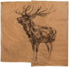 Nicola Hicks, Stag, Charcoal on brown paper, x 80 Fashion Textiles, What To Draw, Stone Age, Brown Paper, Life Drawing, Textile Prints, Graphic Design Art, Light In The Dark, Creative Art
