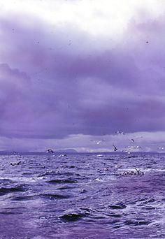 Lavender sea & sky