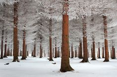 Forest in Serbia.