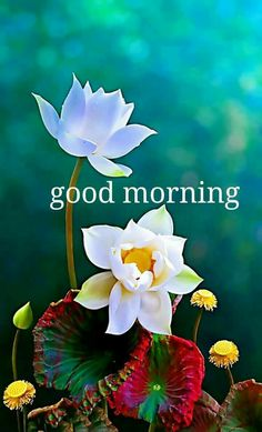 Get a list of good morning flower images to send to your friends and family to make their morning good and Peaceful with great quotes on the flower images. Good Morning Beautiful Images, Good Morning Images Hd, Good Morning Picture, Morning Pictures, Beautiful Scenery, Good Morning Flowers Quotes, Good Morning Roses, Good Morning Happy, Positive Good Morning Quotes