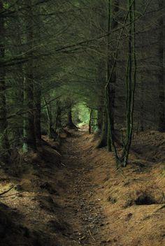 Forest corridor - Scotland