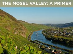 Germany's Mosel valley is near the northern limit for growing wine grapes, yet it is a classic region that produces some of the world's top white wines. Meet some of the region's best producers and learn why it's such a great place to grow Riesling in this video.