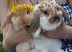 Create an adorable flower crown for your furry friend Animals And Pets, Baby Animals, Cute Animals, Spring Animals, Small Animals, Baby Bunnies, Cute Bunny, Bunny Rabbits, Cute Animal Pictures