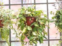 Riego de las plantas en vacaciones Desert Rose Plant, Plant Sale, Artificial Plants, Aloe Vera, Diabetes, Cactus, Indoor, Herbal Medicine, Moringa Oleifera