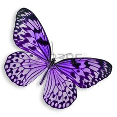 Purple Butterfly flying Isolated on white background. Stock Photo - 15652174 Stock Photo - Purple Butterfly flying Isolated on white background. Purple Butterfly Tattoo, Butterfly Drawing, Butterfly Painting, Butterfly Crafts, Butterfly Wings, Purple Butterfly Wallpaper, Butterfly Colors, Butterfly Clip Art, Butterfly Pattern