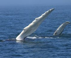 Ever had a whale high-five? Take a whale-watching trip in the Bay of Fundy and you never know what will happen! Vacation Trips, Vacations, New Brunswick Canada, Adventure Of The Seas, Excursion, My Dream Came True, Sea Birds, Whale Watching, Nova Scotia