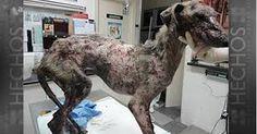 Resultado de imagen de maltrato animal perros