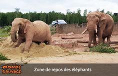 Zone de repos des éléphants.