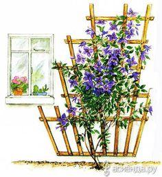 Garden Fence Panels, Pergola Garden, Outdoor Pergola, Garden Trellis, Outdoor Landscaping, Landscaping Plants, Garden Planters, Wall Paint Inspiration, Garden Inspiration
