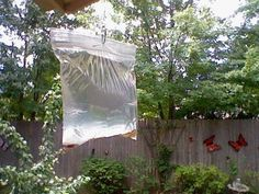 FLIES will never come in your house again! Pennies hung in a baggie of water near the door. Oklahoma people and restaurant owners do this and it really works.What you will need:   A clear plastic sandwich bag (you can get these at wal-mart or any other grocery store).   2 1/2 cups of water.   A bottle of lime juice.   2 teaspoons of salt.   Two or three paper clips   And some shiny pennies.   You will also need a bowl and a spoon