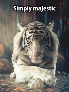 Tigers, like most big cats, cannot purr. But they should. Here, I will share my love of this most magnificent of all cat species. Nature Animals, Animals And Pets, Baby Animals, Funny Animals, Cute Animals, Wildlife Nature, Big Cats, Cool Cats, Cats And Kittens