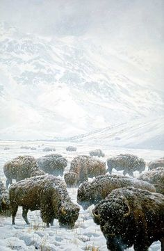 Winter Grazing Bison.  Pinned by indus® in honor of the indigenous people of North America who have influenced our indigenous medicine and spirituality by virtue of their being a member of a tribe from the Western Region through the Plains including the beginning of time until tomorrow.