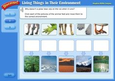 Animal Adaptations - Interactive Learning Sites for Education - Science - Education - Fourth Grade Science, Primary Science, Science Curriculum, Science Resources, Elementary Science, Science Classroom, Science Lessons, Teaching Science, Science Education
